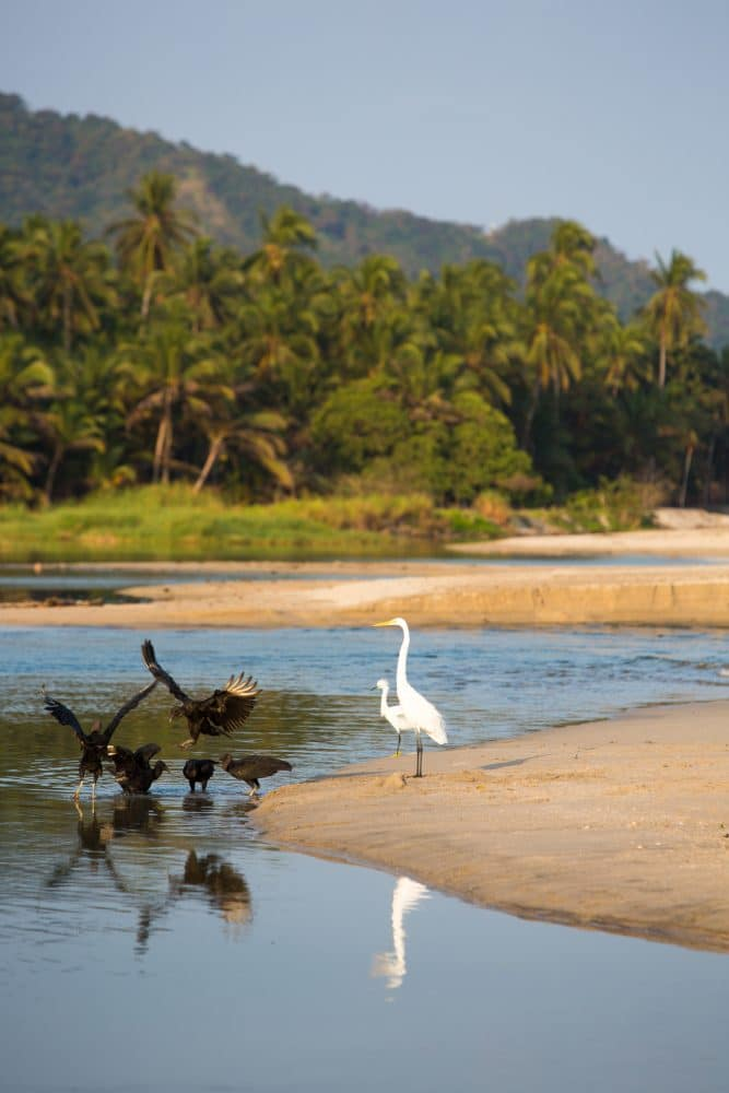 Group of birds early in the morning on the coastline near Palomino, La Guajira, Colombia 2014.
